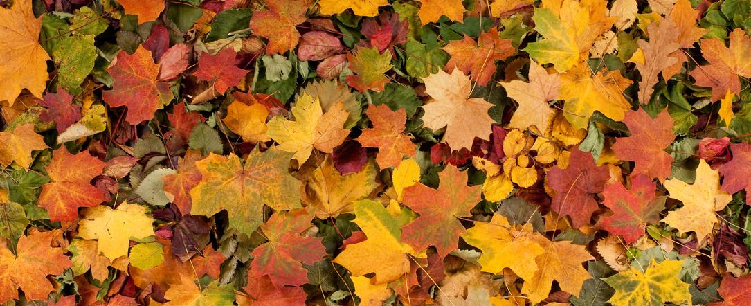 Vos arbres et arbustes en octobre et novembre