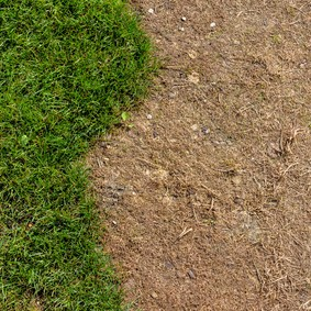 Wiese wurde mit einem Unkrautvernichtungsmittel gespritzt. Rasen Erneuerung